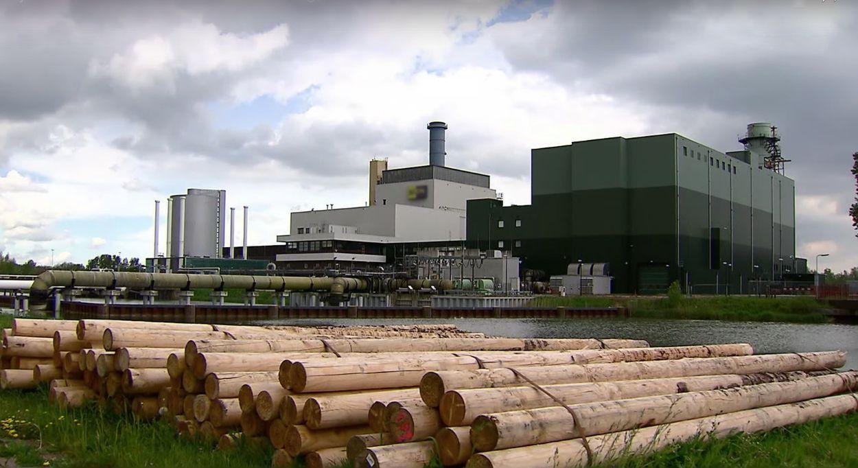 Afbeelding van Steeds meer biomassacentrales in Nederland